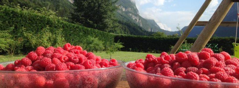 Trentino: i tour gastronomici da fare in e-bike