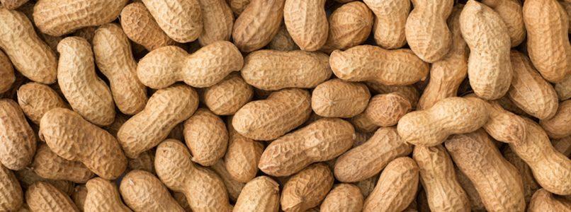 Arrivano le arachidi 100% italiane