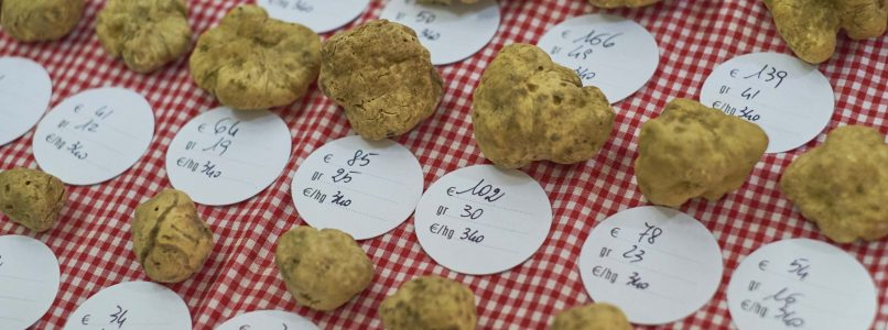 Mangiare il tartufo alla Fiera del Tartufo Bianco d'Alba: la guida per neofiti